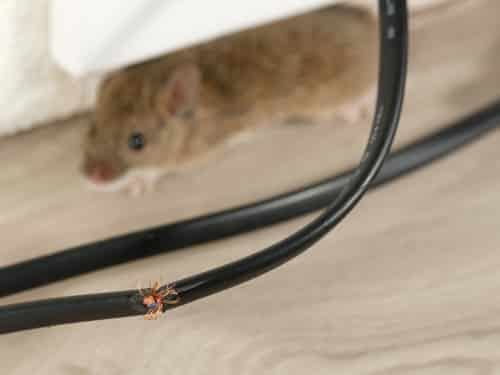 pest control services in Toronto